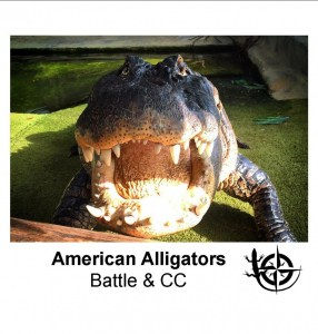 American Alligators.jpg