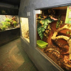 The National Reptile Zoo