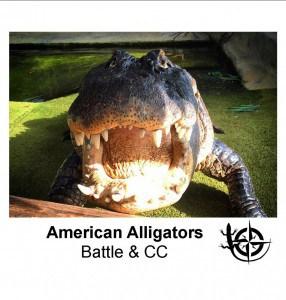 American Alligators.jpg