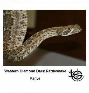 WDB Rattlesnake