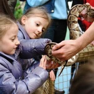 royal python animal encounter