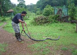 King Cobra Research