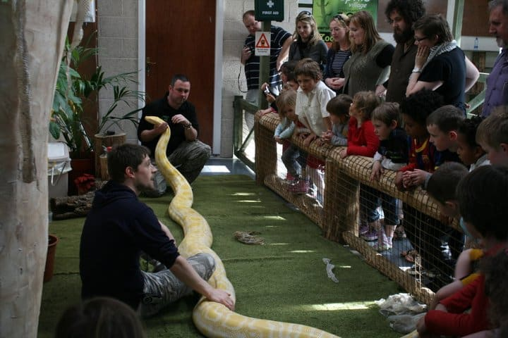 School Tours and Group Visits to the National Reptile Zoo