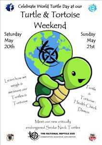 World TURTLE day poster 2 edited